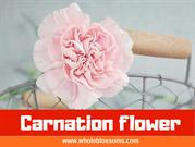 Purchase Different Carnation Flowers for Any Event