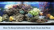 How To Keep Saltwater Fish Tank Clean And Neat