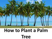 How to Plant a Palm Tree
