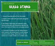 How to remove grass stains from your carpet