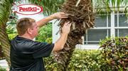 Looking for a reliable pest control services in Grand Cayman?
