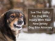 Sue The Guilty For Dog Bite Injury With Your Dog Bite Attorney