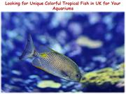 Unique colorful tropical fish in UK