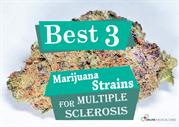 Best 3 Marijuana Strains for Multiple Sclerosis