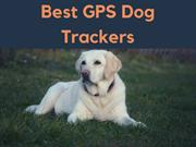 Best GPS Dog Trackers | Read Here