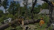 Why Is Tree Removal Melbourne Important For Protecting The Property An