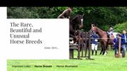 Horse Breeds PDF Horse Illustrated