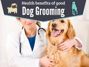 Health Benefits of Good Dog Grooming Services