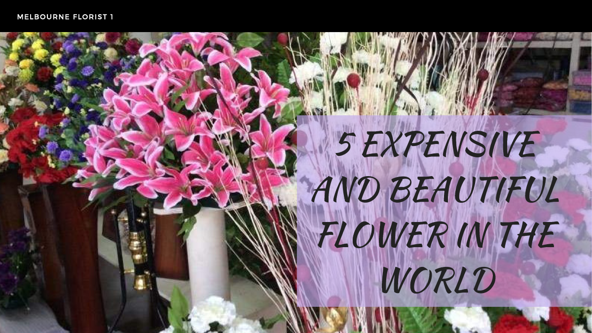5 Expensive And Beautiful Flowers In The World Authorstream