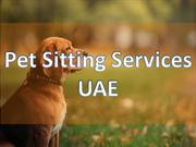 Choose The Best Pet Day Care Services In Dubai