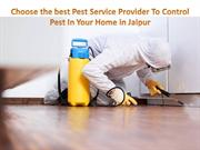 Choose the best Pest Service Provider To Control Pest In Your Home in