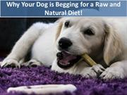 Why Your Dog is Begging for a Raw and Natural Diet!
