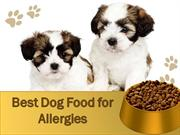 Best Food for Allergies
