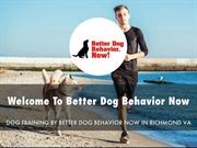 Better Dog Behavior Now Presentation