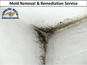 Mold Removal & Remediation Service in Durham NC