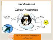 Lecture06-respiration