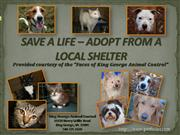 Save A Life - Adopt From a Local Shelter