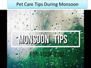 Pet Care Tips During Monsoon