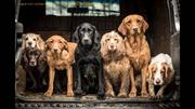 Dog Photographer of the Year 2018
