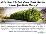 Let's Know Why Skip Laurel Plants Best For