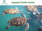 The Largest Land-based Attraction in the Cayman Islands