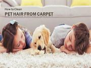 Simple way to Remove Pet Hair From Your Carpet