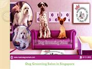 Best Dog Grooming Salon in Singapore