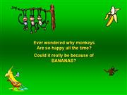 Ever wondered why monkeys Are so happy?