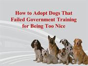 How to Adopt Dogs That Failed Government Training for Being Too Nice