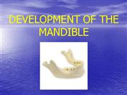 mandible development