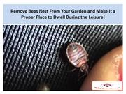 Remove Bees Nest From Your Garden and Make It a Proper Place to Dwell