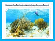 Explore The Fantastic Aqua Life At Cayman Islands