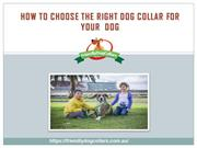 How To Choose the Right Dog Collar For Your  Dog Friendly Dog Collars