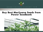 Marijuana Seeds | 710 Genetics Seeds | Power Seed Bank