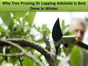 Why Tree Pruning Or Lopping Adelaide Is Best Done In Winter
