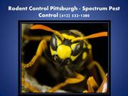 Rodent Control Pittsburgh