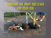 How to Choose Right Dog Leads | Friendly Dog Collars