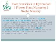Plant Nurseries in Hyderabad | Flower Plant Nurseries | Sneha Nursery