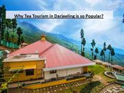 The Reason behind the Immense Popularity of Tea Tourism in Darjeeling