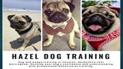 Puppy Training Ilkeston