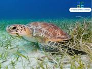 Visit the Largest Land-based Attraction in the Cayman Islands