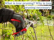 What is Tree Pruning? Why is Tree Pruning Necessary?