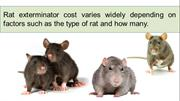 How Much Do Rat Control Services Cost