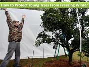 How to Protect Young Trees From Freezing Winter