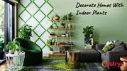 Decorate Homes With  Indoor Plants 10