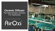 Ceramic Diffuser - The Ideal Aeration Solution for Hatcheries-AirOxi T