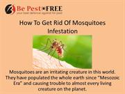 How To Get Rid Of Mosquitoes Infestation