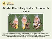 Tips for Controlling Spider Infestation At Home
