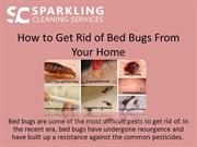 How to Get Rid of Bed Bugs From