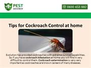 Tips for Cockroach Control at home